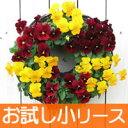 (お試し)お花で作るハンギングリース(小サイズ)