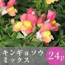 ★★キンギョソウ 金魚草 矮性種 花苗 24ポットミックス