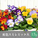 なごみ 虹色スミレ プレミアム パンジー 花苗 15ポットミックス