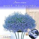 サントリー ロベリア アズーロコンパクト 3.5号花苗