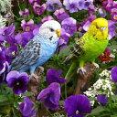 【小鳥】カラフルインコ2点セット(12143・4)