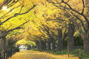 【1000P】 黄金色の散歩道—東京