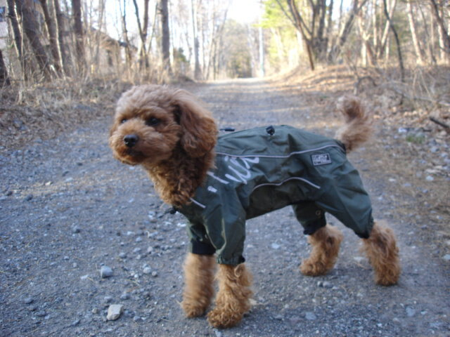 -For dog ドッグレイン coat 'Hurtta Pro Outdoor Overall small and medium-sized
