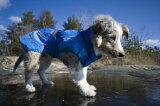 【Hurtta】【フルッタ】・ドッグレインコート「Hurtta Pro Rain coat」 小型犬用