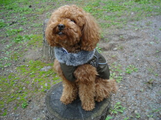 Finland's dog brand, dog coat for dogs