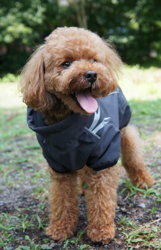 フィンランドのドッグブランド【Hurtta】【フルッタ】・ドッグコート【Frost Jacket・フロスト ジャケット】大型犬用