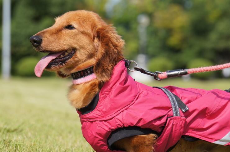 フィンランドのドッグブランド【Hurtta】【フルッタ】・ドッグコート【Summit Parka・サミットパーカー】小・中型犬用