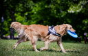 世界25カ国以上で愛されている機能性抜群ハーネス Julius-K9 ユリウスケーナイン・IDCパワーハーネス Miniサイズ 小・中型犬用サイズ