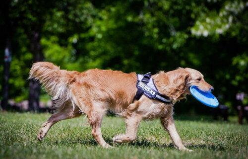 【人気のある】 犬 数,犬 首輪 アマゾン 蔵払いを一掃する