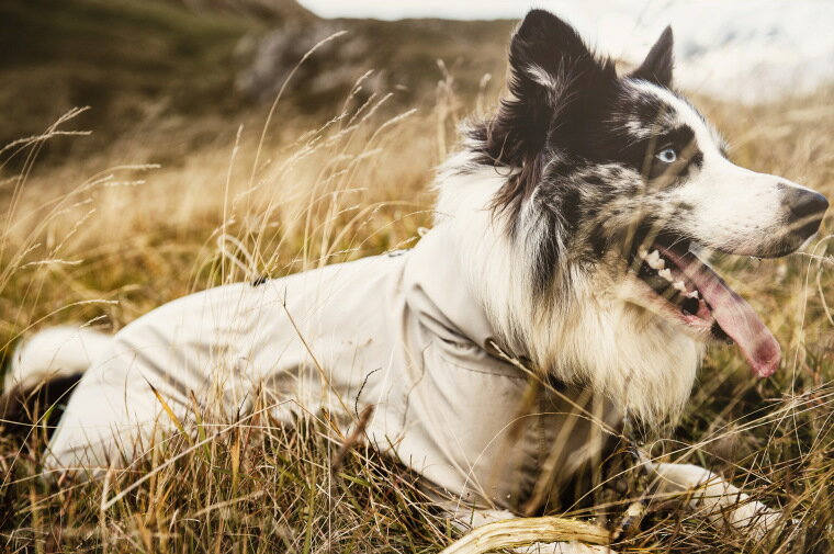 【Hurtta】【フルッタ】・ドッグオーバーオール SUN & Bug Blocker 小型犬~中型犬用サイズ