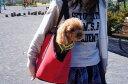 ドイツ・ウォルターズ ソフトキャリーバッグ Lサイズ 小〜中型犬用