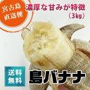 島バナナ【送料無料】【フルーツ】沖縄県宮古島産島バナナ 3kg以上(2〜5房)