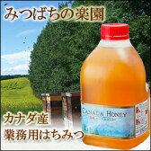 【業務用】カナダ産蜂蜜(はちみつ)2.0kg【純粋蜂蜜】【専門店蜂蜜】