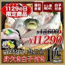 【1129の日イイフグの日限定商品】【3年とらふぐ】(元魚1.3kg:大きくなりました!)鍋5人前丸ごと1匹 身欠き白子付き!