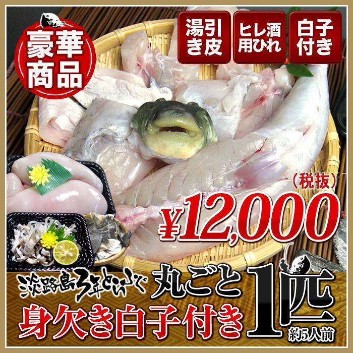【3年とらふぐ】丸ごと1匹 身欠き白子付き!(元魚1.3kg:大きくなりました!)鍋5人前