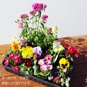 【送料無料】季節のお花の玉手箱☆スタンダード16ポットセット...
