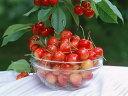朝採りさくらんぼ 佐藤錦 Mサイズ 1k 農園から産地直送【果物・季節商品】