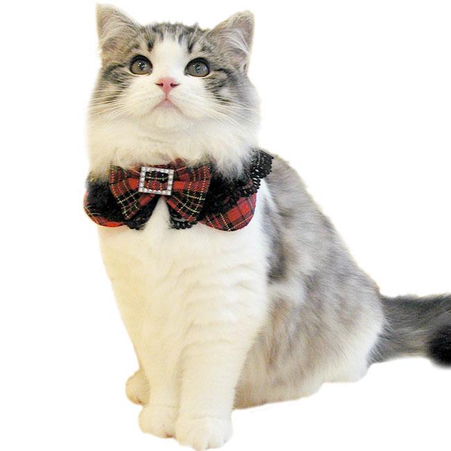 【黒レース&リボン付タータンチェック丸猫服】タータンチェックとダイヤのバックルがぴったりです!なんて綺麗なおしゃれアイテム。一つは欲しい猫服です!