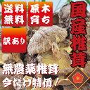 定形外等送料無料 九州産 【訳あり】原木乾椎茸【梅】90g ...