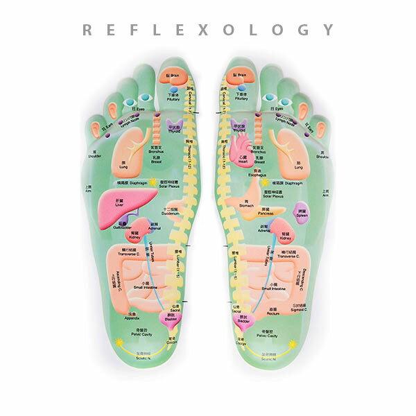 【ポスター】 3D足のリフレクソロジーチャート デスクサイズプラスチック版 [ 人体チャート 医学チャート 人体ポスター 人体解剖図 人体図 整体用品 ][ E-5-1-2 ][ 7エステ ]