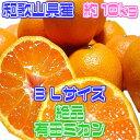 【和歌山県産】絶品 有田みかん 3Lサイズ 約10kg【箱売...