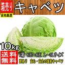 【産地厳選】国産 低農薬 大玉キャベツ 1箱 L〜3Lサイズ...