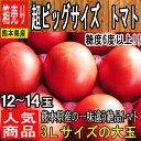 【熊本県 他 西日本産】超ビッグサイズ トマト 1箱 3Lサイズ 12〜14玉入【送料別
