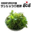 【滋賀県他西日本産】木の芽 山椒の若芽 1パック【野菜詰め合わせセットと同梱で送料