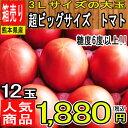 【熊本県 他 西日本産】超ビッグサイズ トマト 1箱 3Lサイズ 12玉入【クール便