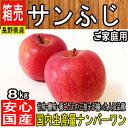 長野県産【ご家庭用】大きさお任せ サンふじりんご 約8kg〜10kg ご家庭用/リンゴ/訳あ