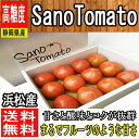 【静岡県浜松産】とってもあま〜い 高糖度フルーツトマト SanoTomato 1箱8玉〜13玉