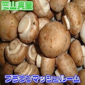 【岡山県産】ブラウンマッシュ...