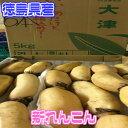 【西日本産 有機野菜】【徳島県産】新れんこん【野菜詰め合わせセットと同梱で送料無料】
