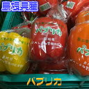 【島根県産】パプリカ【野菜詰...