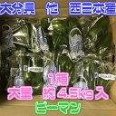 【大分県他西日本産】ピーマン 1箱 約4.5kg入【500円オフクーポン利用不可】【送料無料】(北海