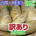 【九州、四国産】朝堀り 新たけのこ タケノコ 竹の子 筍 約10kg 小サイズ 訳あり【同梱不可】【
