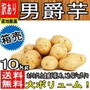 【産地厳選】男爵芋 新じゃが 1箱 L〜2Lサイズ 約10k...