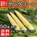 【徳島県産】 皮付きヤングコーン 1箱50本入/とうもろこし/コーン 新入荷【ゆうパッ