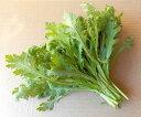 収穫したその日に発送します『春菊』、除草剤不使用・有機質の肥料で育てました。【RCP】