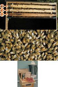 ミツバチ飼育3枚群入門キット