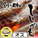 【北海道 釧路笹谷】釧路 釧之助 干しししゃも(オス) 10尾