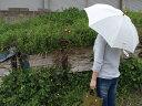 日傘 リネンパラソル (長傘/ストライプ)/SUR MER シュルメール送料無料 天然素材にこだわった長く愛せる日本製日傘