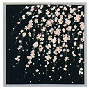 A cotton small furoshiki hangs down; a cherry tree (black) free shipping furoshiki kimono Japanese towel [smtb-k] [ky]