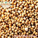 イエローマスタードシード 100g 常温便,Yellow Mustard Seeds,原型,マスタードシード,