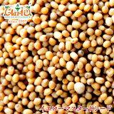 イエローマスタードシード 50g 【常温便】【Yellow Mustard Seeds】【原型】【マスタードシード】【マスタード】【シード】【ホール】【芥子】【からし】【スパイス】