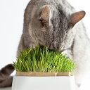 ○HARIO ハリオ 猫草栽培キット にゃんベジセット PTS-NKC-2有田焼陶器で猫草が作れます!(ペット/猫/ネコ/猫草/毛玉配慮/高級/和食器)
