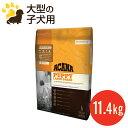 【送料無料】【リニューアル】アカナ パピーラージブリード(11.4kg)大型犬/小犬用(賞味期限2017.5.6)