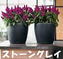 【送料・代引手数料無料】レチューザ・ラウンド35