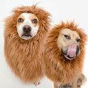 大型 犬 ライオン たてがみ ハロウィン コスプレ パーティー イベント グレートピレニーズ マスティフ ビーグル オーストラリアンキャトルドッグ