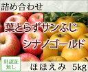 葉とらずサンふじ・シナノゴールド 詰め合わせ ほほえみ(訳あり) 約5kg 県認証無し リンゴ 詰め合わせ 青森 国産 認なし